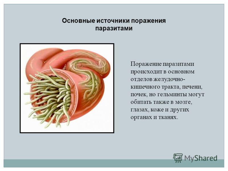 Поражение паразитами происходит в основном отделов желудочно- кишечного тракта, печени, почек, но гельминты могут обитать также в мозге, глазах, коже и других органах и тканях. Основные источники поражения паразитами