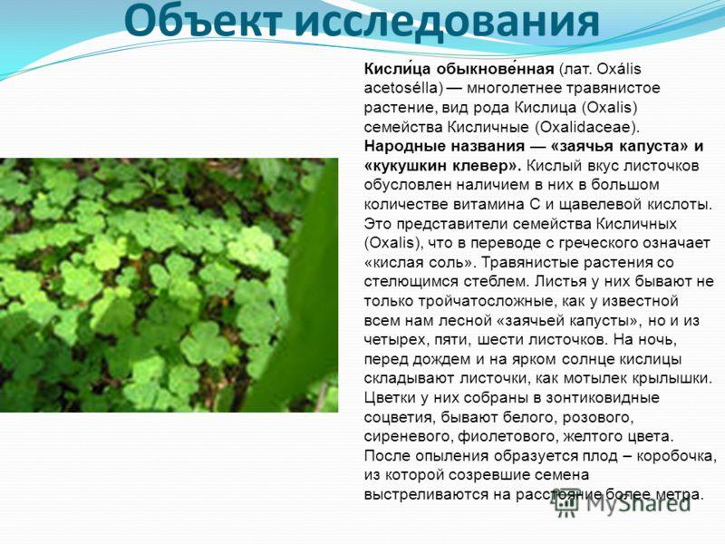 Объект исследования Кисли́ца обыкнове́нная (лат. Oxális acetosélla) многолетнее травянистое растение, вид рода Кислица (Oxalis) семейства Кисличные (Oxalidaceae). Народные названия «заячья капуста» и «кукушкин клевер». Кислый вкус листочков обусловле