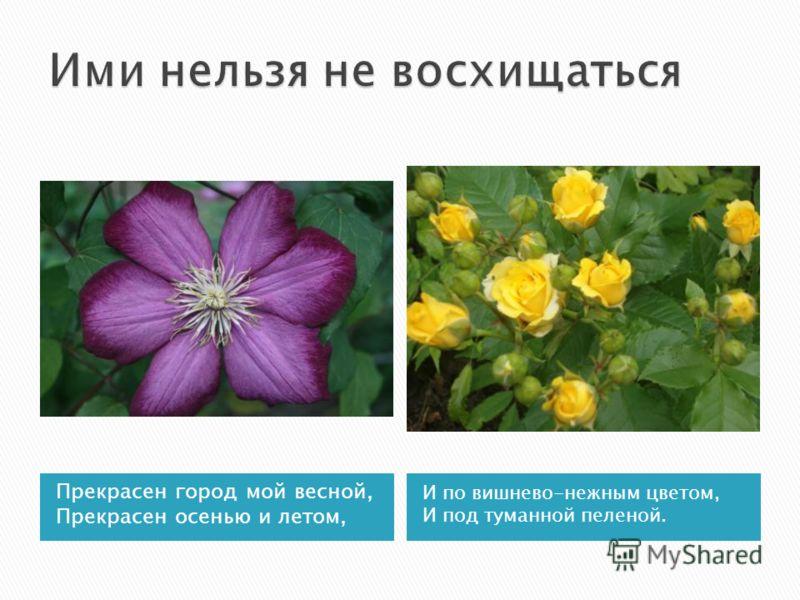 Прекрасен город мой весной, Прекрасен осенью и летом, И по вишнево-нежным цветом, И под туманной пеленой.
