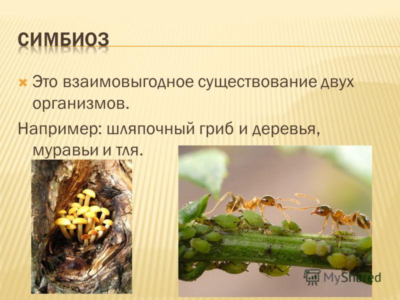 Это взаимовыгодное существование двух организмов. Например: шляпочный гриб и деревья, муравьи и тля.