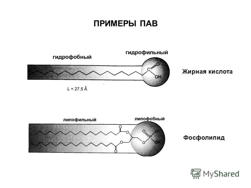 ПРИМЕРЫ ПАВ Жирная кислота Фосфолипид