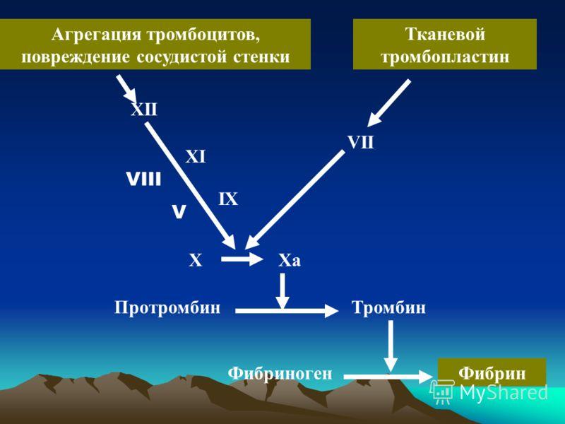 Агрегация тромбоцитов, повреждение сосудистой стенки Тканевой тромбопластин XII XI IX Xa VII X ПротромбинТромбин ФибриногенФибрин VIII V