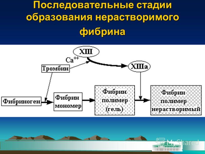 Последовательные стадии образования нерастворимого фибрина