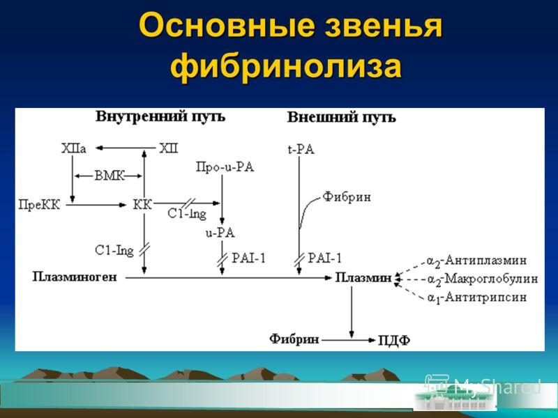 Основные звенья фибринолиза Основные звенья фибринолиза