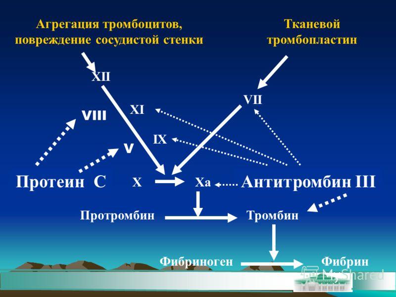 Агрегация тромбоцитов, повреждение сосудистой стенки Тканевой тромбопластин XII XI IX Xa VII X ПротромбинТромбин ФибриногенФибрин VIII V Протеин САнтитромбин III