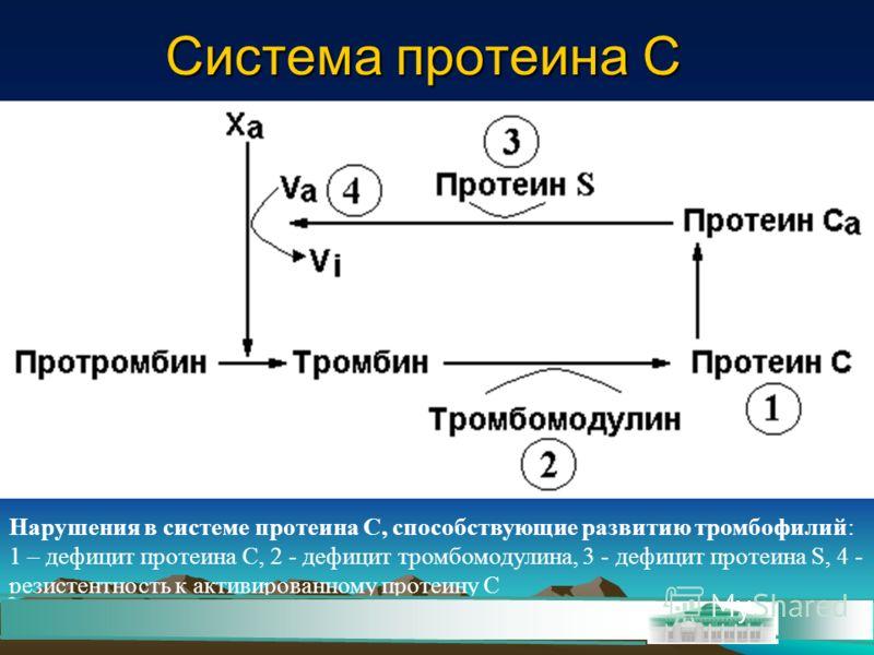 Нарушения в системе протеина С, способствующие развитию тромбофилий: 1 – дефицит протеина С, 2 - дефицит тромбомодулина, 3 - дефицит протеина S, 4 - резистентность к активированному протеину С