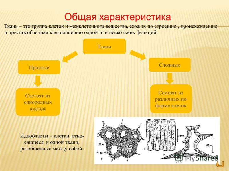 Текст Ткань – это группа клеток и межклеточного вещества, схожих по строению, происхождению и приспособленная к выполнению одной или нескольких функций. Идиобласты – клетки, отно- сящиеся к одной ткани, разобщенные между собой. Общая характеристика Т