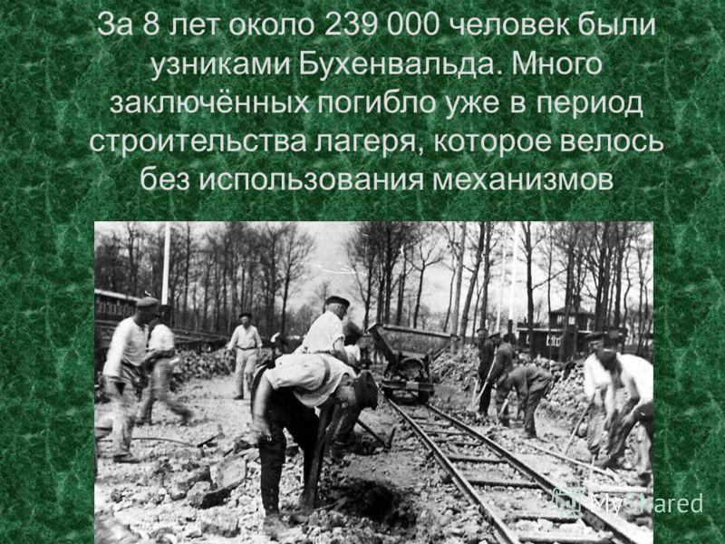 За 8 лет около 239 000 человек были узниками Бухенвальда. Много заключённых погибло уже в период строительства лагеря, которое велось без использования механизмов