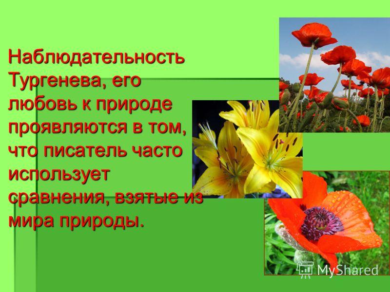 Наблюдательность Тургенева, его любовь к природе проявляются в том, что писатель часто использует сравнения, взятые из мира природы. Наблюдательность Тургенева, его любовь к природе проявляются в том, что писатель часто использует сравнения, взятые и