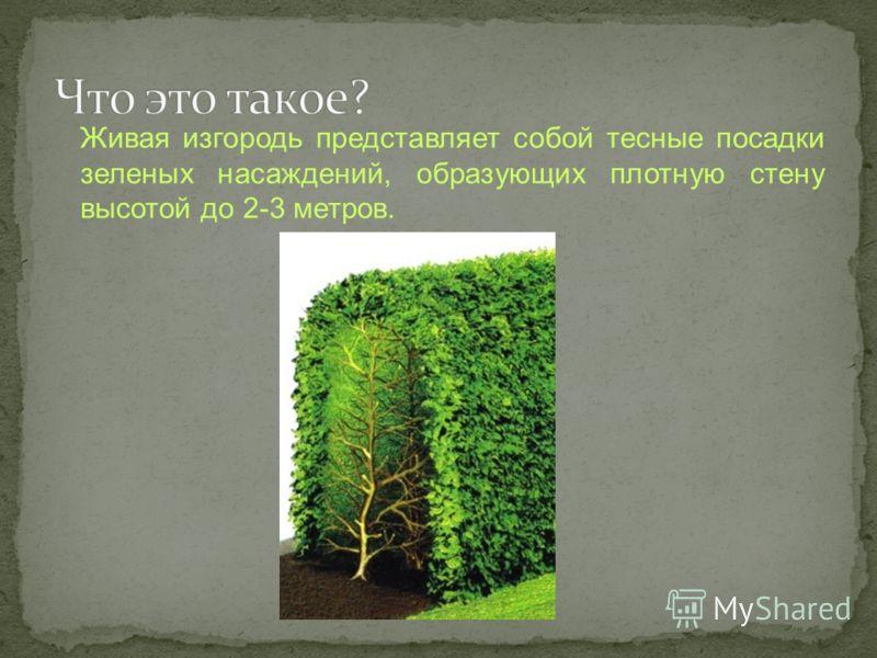 Живая изгородь представляет собой тесные посадки зеленых насаждений, образующих плотную стену высотой до 2-3 метров.
