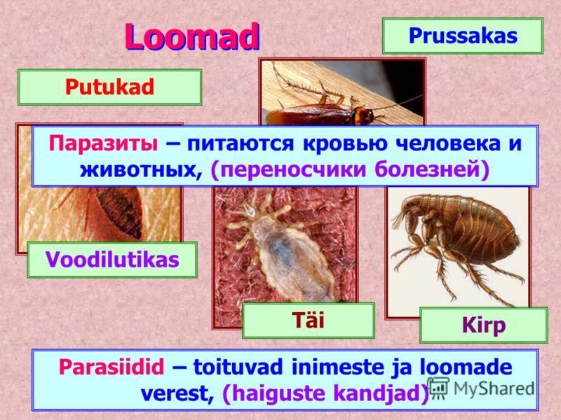 Loomad Putukad Prussakas Voodilutikas Kirp Täi Parasiidid – toituvad inimeste ja loomade verest, (haiguste kandjad) Паразиты – питаются кровью человека и животных, (переносчики болезней)