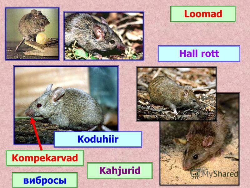 Loomad Koduhiir Hall rott Kompekarvad Kahjurid вибросы