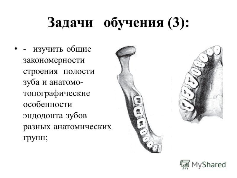Задачи обучения (3): - изучить общие закономерности строения полости зуба и анатомо- топографические особенности эндодонта зубов разных анатомических групп;