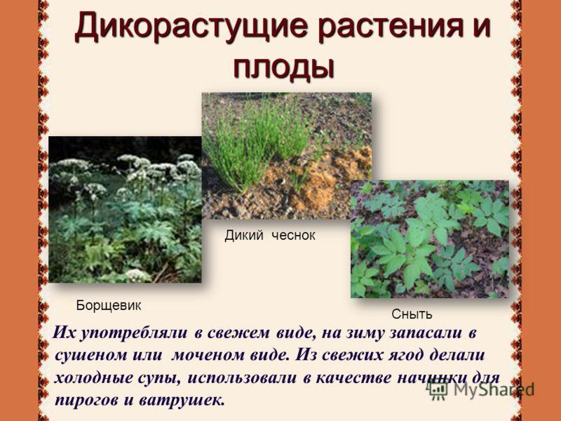 Дикорастущие растения и плоды Их употребляли в свежем виде, на зиму запасали в сушеном или моченом виде. Из свежих ягод делали холодные супы, использовали в качестве начинки для пирогов и ватрушек. Дикий чеснок Сныть Борщевик