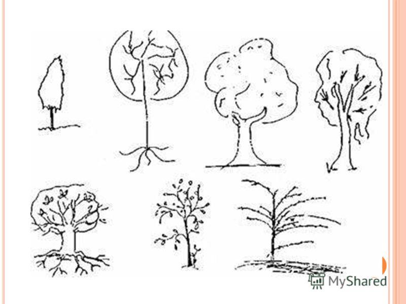 Как понять человека по рисунку дерева