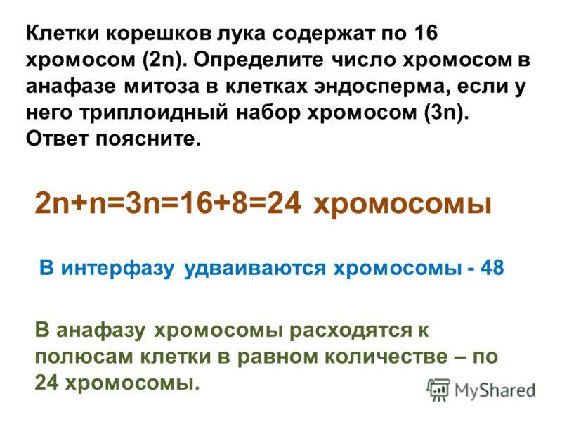 Клетки корешков лука содержат по 16 хромосом (2n). Определите число хромосом в анафазе митоза в клетках эндосперма, если у него триплоидный набор хромосом (3n). Ответ поясните. 2n+n=3n=16+8=24 хромосомы В интерфазу удваиваются хромосомы - 48 В анафаз