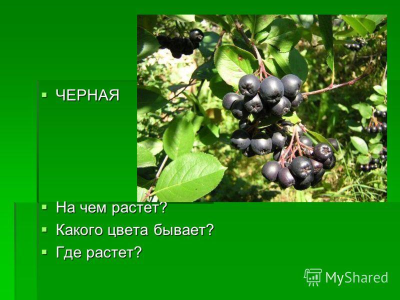 ЧЕРНАЯ ЧЕРНАЯ На чем растет? На чем растет? Какого цвета бывает? Какого цвета бывает? Где растет? Где растет?