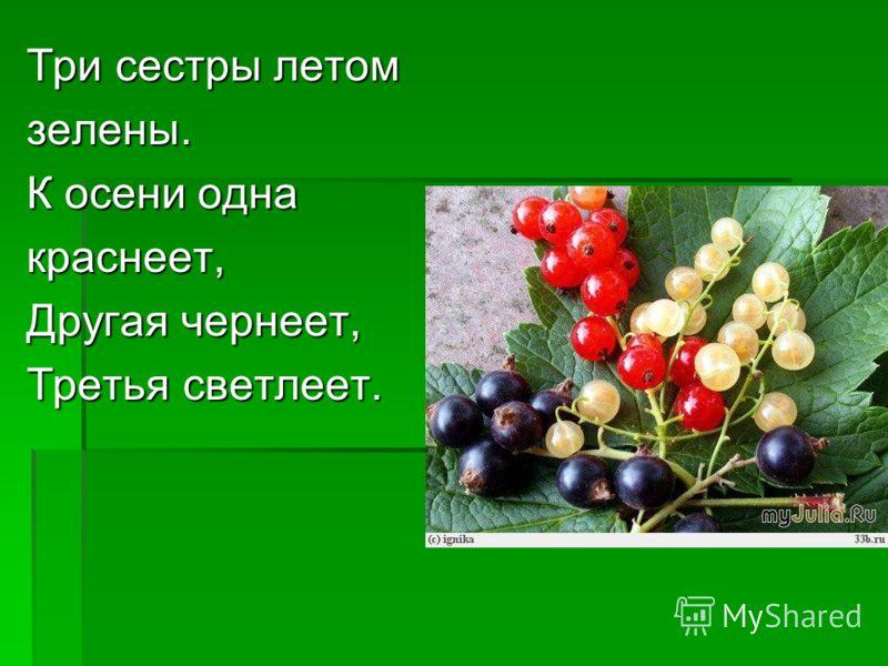 Три сестры летом зелены. К осени одна краснеет, Другая чернеет, Третья светлеет.