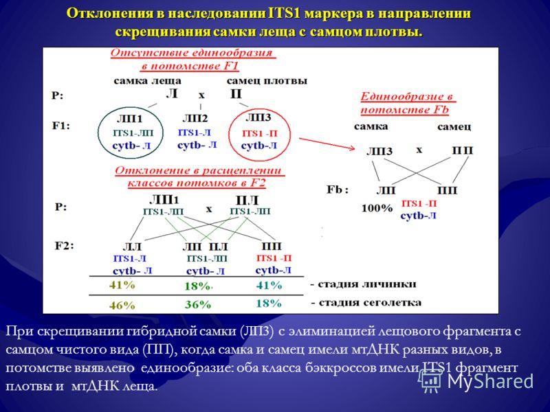 Отклонения в наследовании ITS1 маркера в направлении скрещивания самки леща с самцом плотвы. При скрещивании гибридной самки ( ЛП3 ) с элиминацией лещового фрагмента с самцом чистого вида (ПП), когда самка и самец имели мтДНК разных видов, в потомств