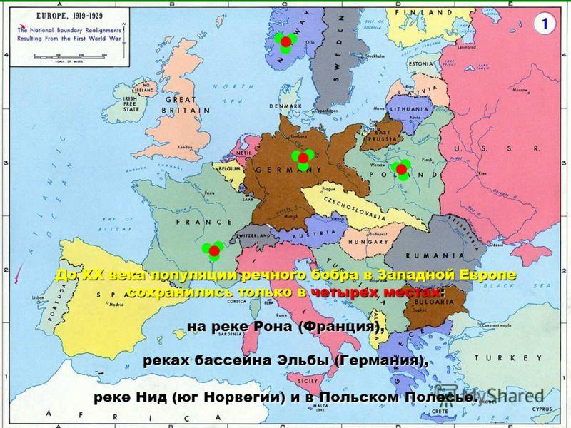 До XX века популяции речного бобра в Западной Европе сохранились только в четырех местах: на реке Рона (Франция), реках бассейна Эльбы (Германия), реке Нид (юг Норвегии) и в Польском Полесье.
