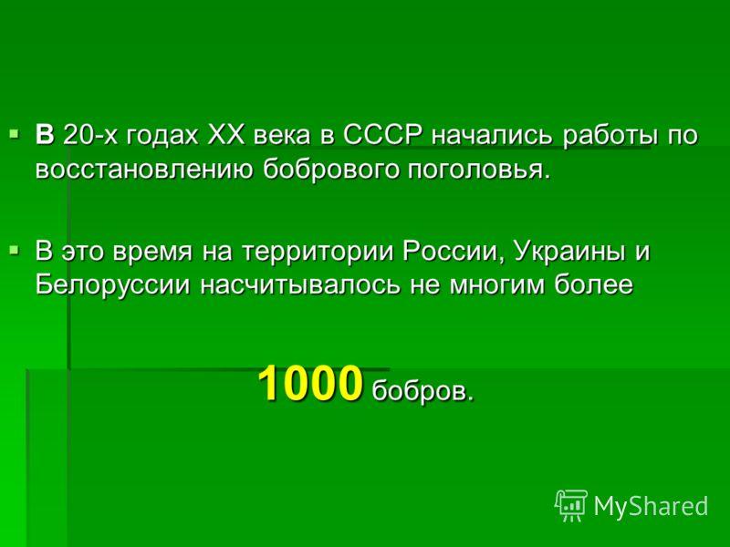 В 20-х годах XX века в СССР начались работы по восстановлению бобрового поголовья. В 20-х годах XX века в СССР начались работы по восстановлению бобрового поголовья. В это время на территории России, Украины и Белоруссии насчитывалось не многим более