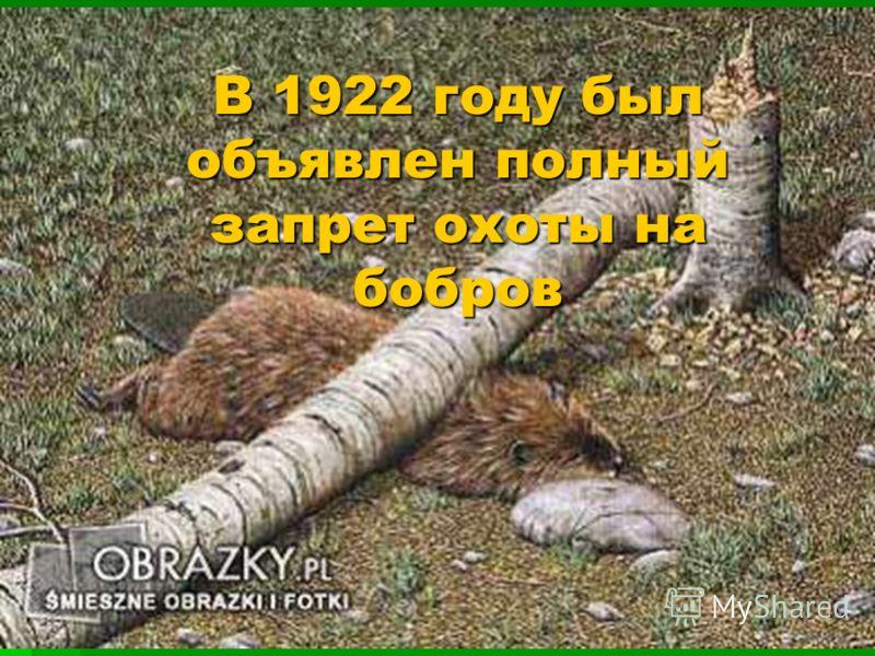 В 1922 году был объявлен полный запрет охоты на бобров