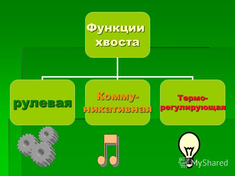 Функциихвоста рулеваяКомму-никативнаяТермо-регулирующая