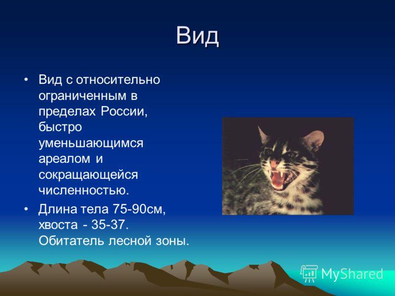 Вид Вид с относительно ограниченным в пределах России, быстро уменьшающимся ареалом и сокращающейся численностью. Длина тела 75-90см, хвоста - 35-37. Обитатель лесной зоны.