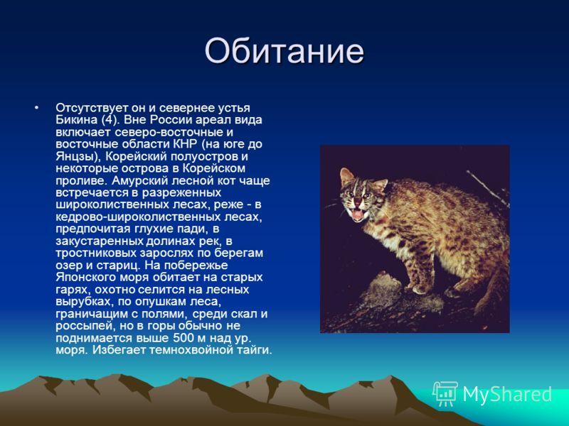 Обитание Отсутствует он и севернее устья Бикина (4). Вне России ареал вида включает северо-восточные и восточные области КНР (на юге до Янцзы), Корейский полуостров и некоторые острова в Корейском проливе. Амурский лесной кот чаще встречается в разре