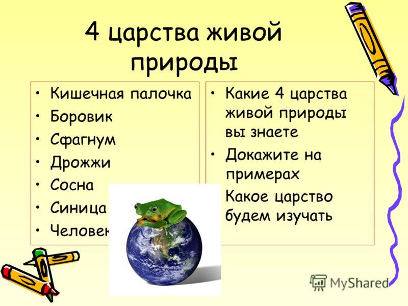 4 царства живой природы Кишечная палочка Боровик Сфагнум Дрожжи Сосна Синица Человек Какие 4 царства живой природы вы знаете Докажите на примерах Какое царство будем изучать