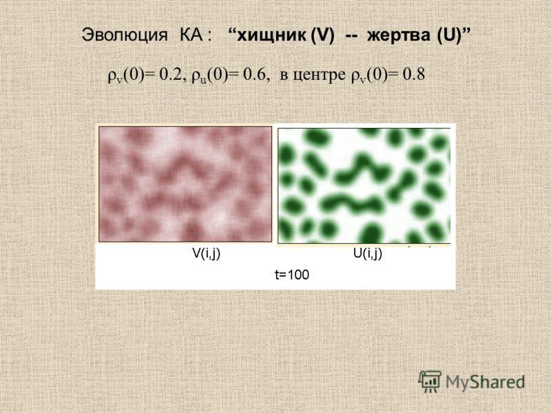 Эволюция КА : хищник (V) -- жертва (U) ρ v (0)= 0.2, ρ u (0)= 0.6, в центре ρ v (0)= 0.8