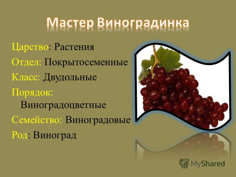 Царство: Растения Отдел: Покрытосеменные Класс: Двудольные Порядок: Виноградоцветные Семейство: Виноградовые Род: Виноград