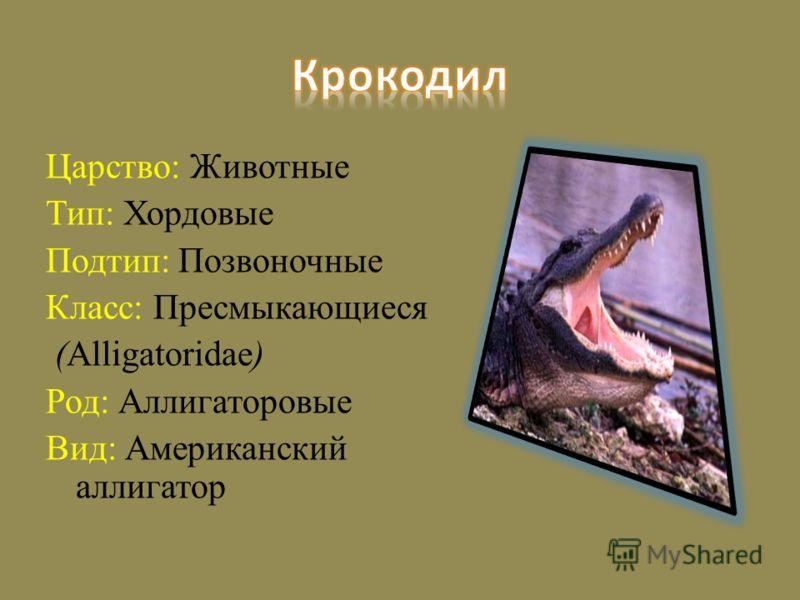 Царство: Животные Тип: Хордовые Подтип: Позвоночные Класс: Пресмыкающиеся (Alligatoridae) Род: Аллигаторовые Вид: Американский аллигатор