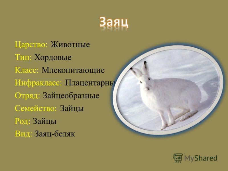 Царство: Животные Тип: Хордовые Класс: Млекопитающие Инфракласс: Плацентарные Отряд: Зайцеобразные Семейство: Зайцы Род: Зайцы Вид: Заяц-беляк