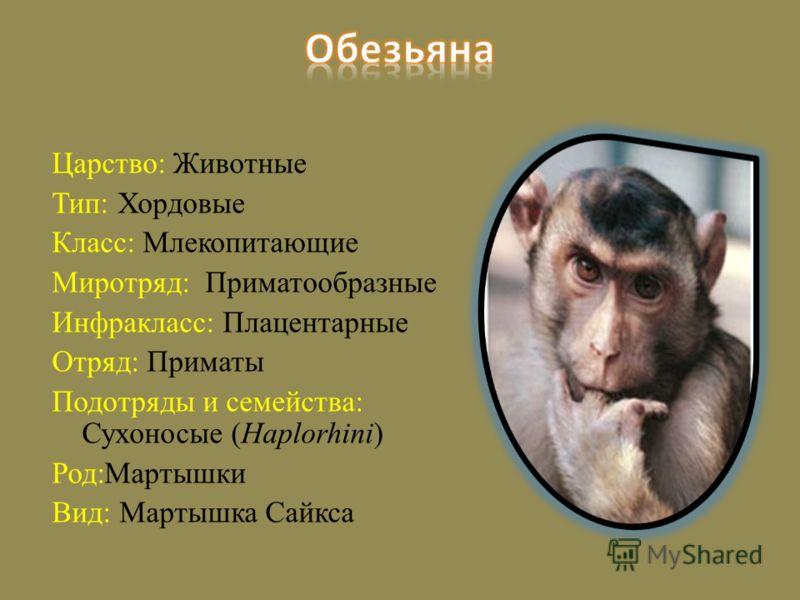 Царство: Животные Тип: Хордовые Класс: Млекопитающие Миротряд: Приматообразные Инфракласс: Плацентарные Отряд: Приматы Подотряды и семейства: Сухоносые (Haplorhini) Род:Мартышки Вид: Мартышка Сайкса