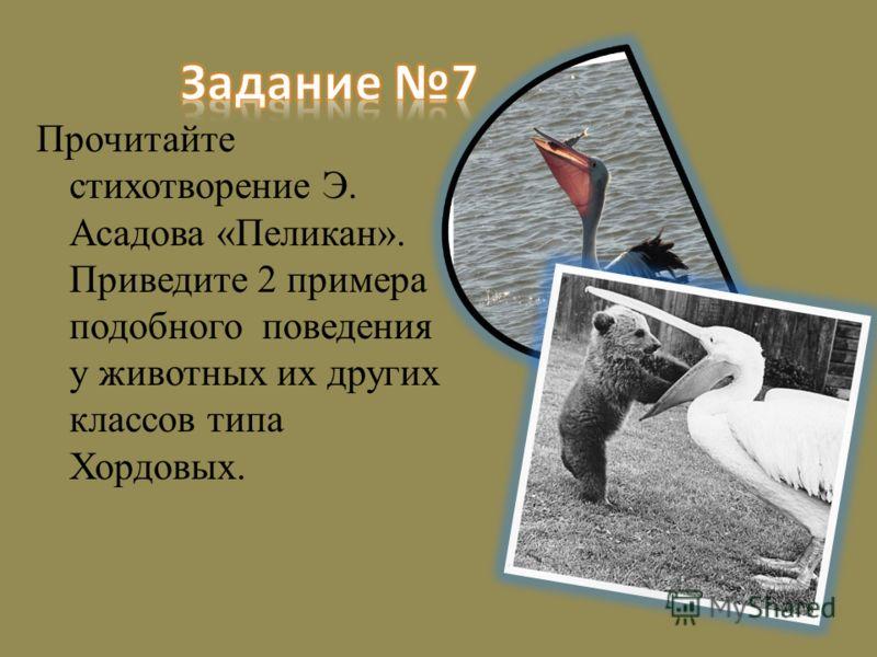 Прочитайте стихотворение Э. Асадова «Пеликан». Приведите 2 примера подобного поведения у животных их других классов типа Хордовых.