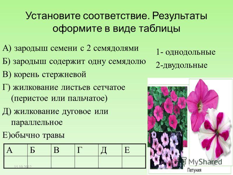 Установите соответствие. Результаты оформите в виде таблицы А) зародыш семени с 2 семядолями Б) зародыш содержит одну семядолю В) корень стержневой Г) жилкование листьев сетчатое (перистое или пальчатое) Д) жилкование дуговое или параллельное Е)обычн
