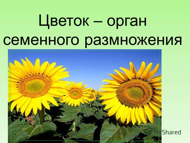 Цветок – орган семенного размножения 15.10.2012 6