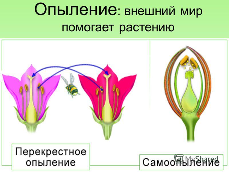 Опыление : внешний мир помогает растению 15.10.2012 8