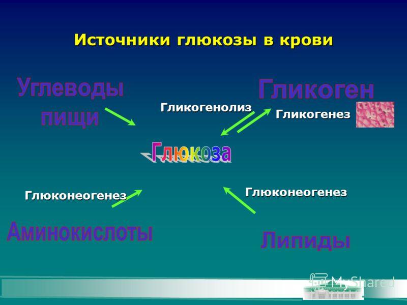 Источники глюкозы в крови Гликогенез Гликогенолиз Глюконеогенез Глюконеогенез