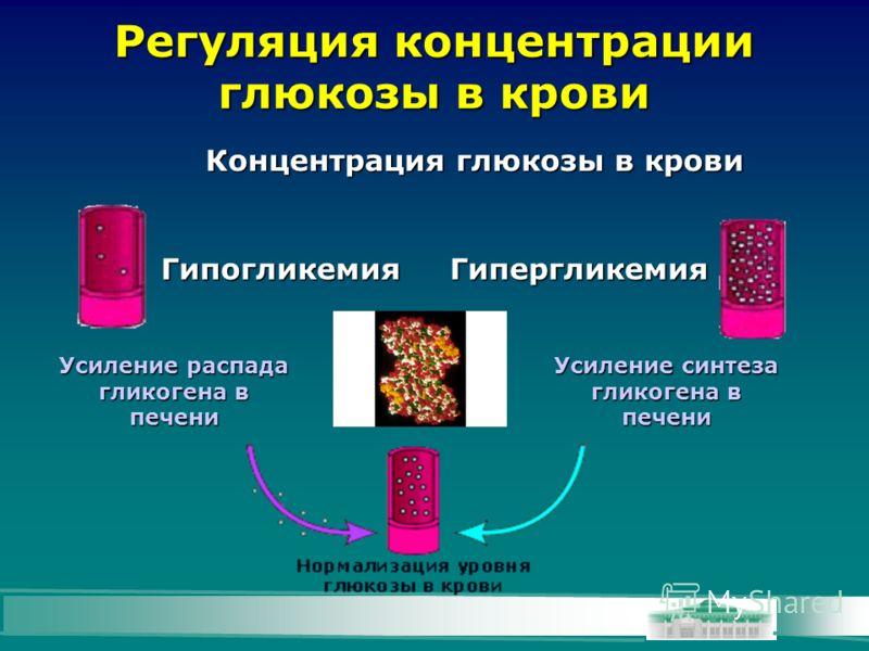 Регуляция концентрации глюкозы в крови Концентрация глюкозы в крови Усиление синтеза гликогена в печени Усиление распада гликогена в печени ГипогликемияГипергликемия