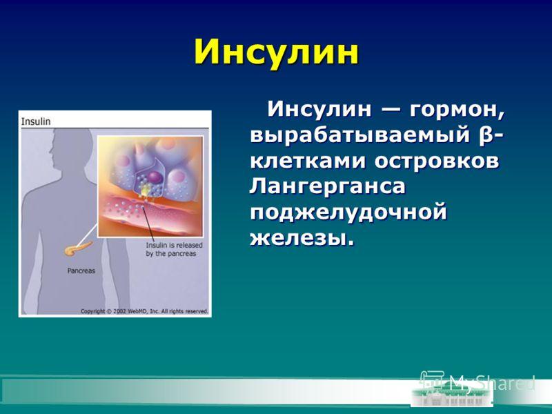 Инсулин Инсулин гормон, вырабатываемый β- клетками островков Лангерганса поджелудочной железы.