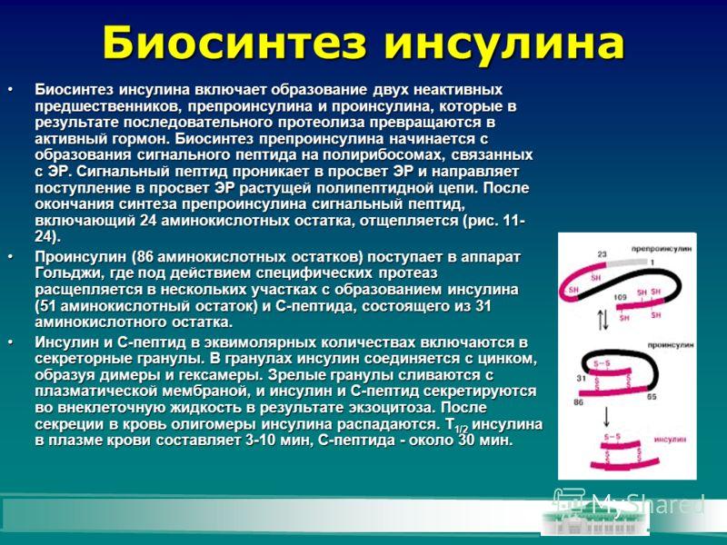 Биосинтез инсулина Биосинтез инсулина включает образование двух неактивных предшественников, препроинсулина и проинсулина, которые в результате последовательного протеолиза превращаются в активный гормон. Биосинтез препроинсулина начинается с образов