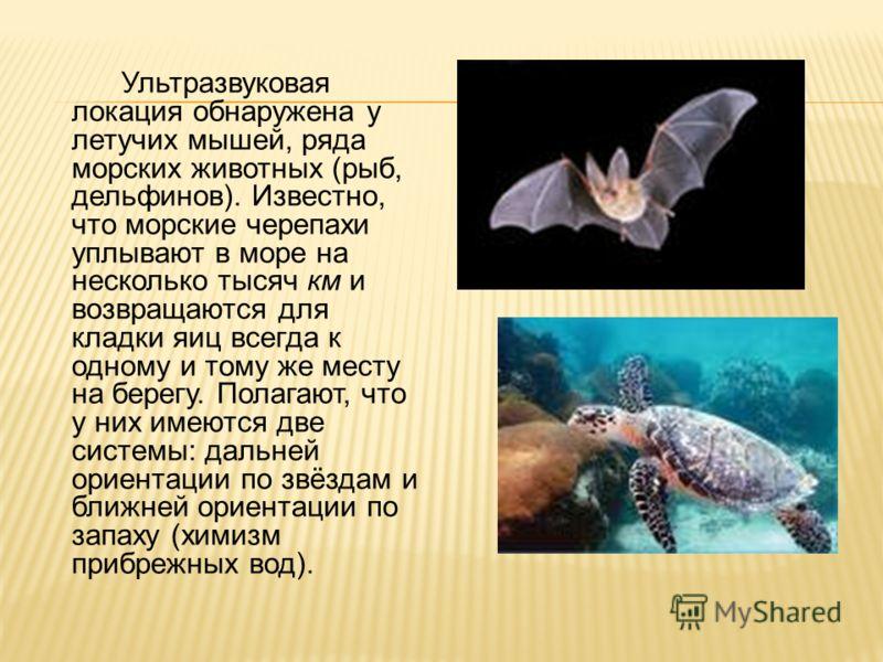Ультразвуковая локация обнаружена у летучих мышей, ряда морских животных (рыб, дельфинов). Известно, что морские черепахи уплывают в море на несколько тысяч км и возвращаются для кладки яиц всегда к одному и тому же месту на берегу. Полагают, что у н