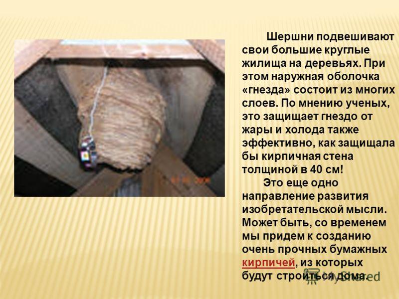 Шершни подвешивают свои большие круглые жилища на деревьях. При этом наружная оболочка «гнезда» состоит из многих слоев. По мнению ученых, это защищает гнездо от жары и холода также эффективно, как защищала бы кирпичная стена толщиной в 40 см! Это ещ