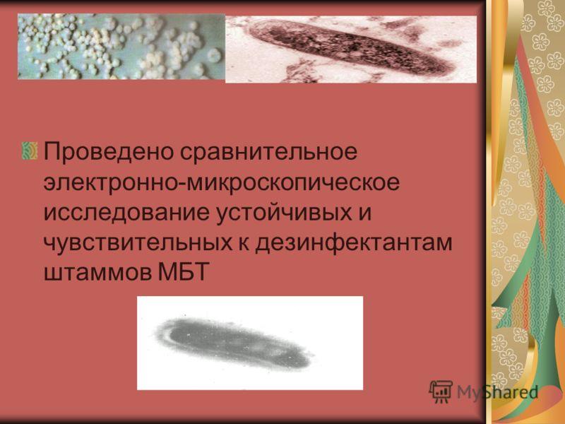 Проведено сравнительное электронно-микроскопическое исследование устойчивых и чувствительных к дезинфектантам штаммов МБТ