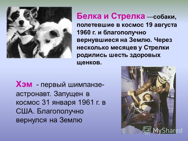 Белка и Стрелка собаки, полетевшие в космос 19 августа 1960 г. и благополучно вернувшиеся на Землю. Через несколько месяцев у Стрелки родились шесть здоровых щенков. Хэм - первый шимпанзе- астронавт. Запущен в космос 31 января 1961 г. в США. Благопол