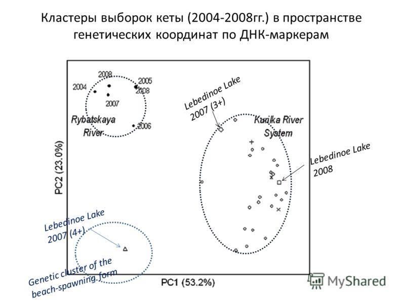Кластеры выборок кеты (2004-2008гг.) в пространстве генетических координат по ДНК-маркерам Lebedinoe Lake 2007 (4+) Lebedinoe Lake 2007 (3+) Lebedinoe Lake 2008 Genetic cluster of the beach-spawning form