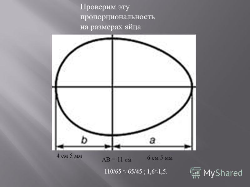 4 см 5 мм 6 см 5 мм АВ = 11 см Проверим эту пропорциональность на размерах яйца 110/65 65/45 ; 1,61,5.