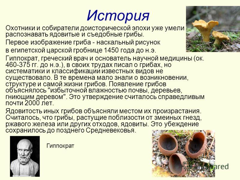 История Охотники и собиратели доисторической эпохи уже умели распознавать ядовитые и съедобные грибы. Первое изображение гриба - наскальный рисунок в египетской царской гробнице 1450 года до н.э. Гиппократ, греческий врач и основатель научной медицин